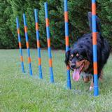 Lord Anson Dog Agility Weave Poles